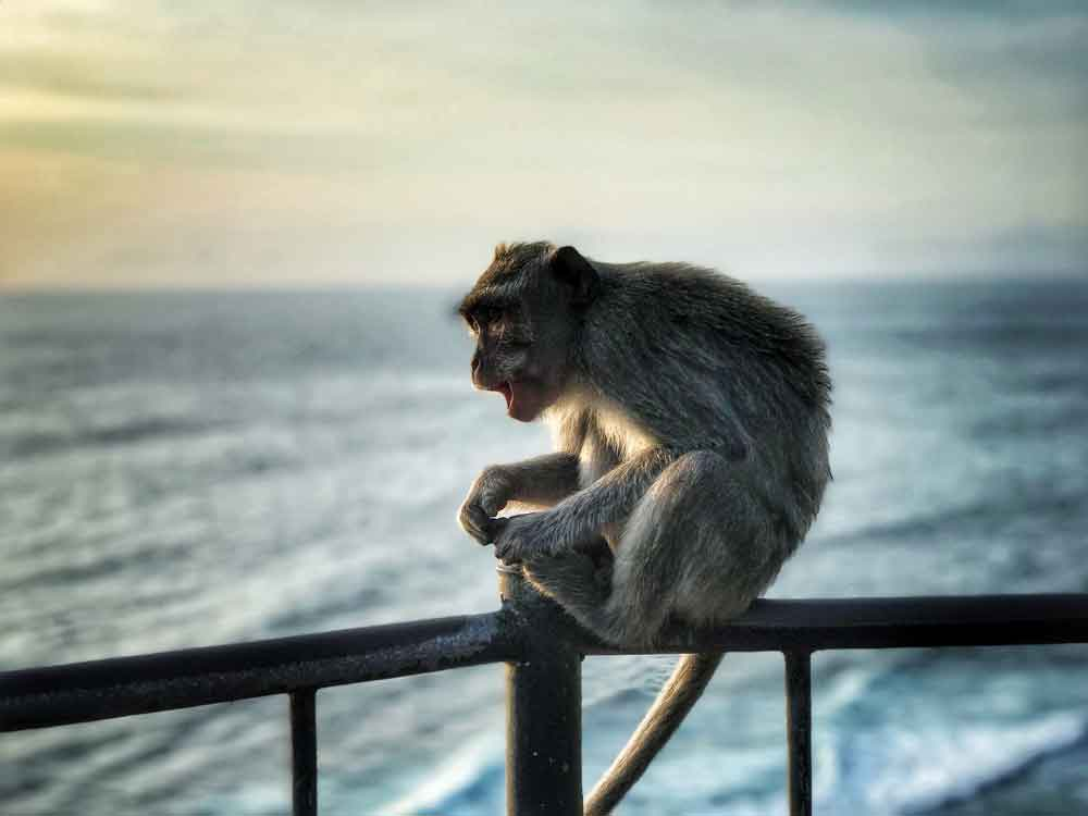 Prevent Monkeys Steal Your Stuffs When Visiting Uluwatu Temple