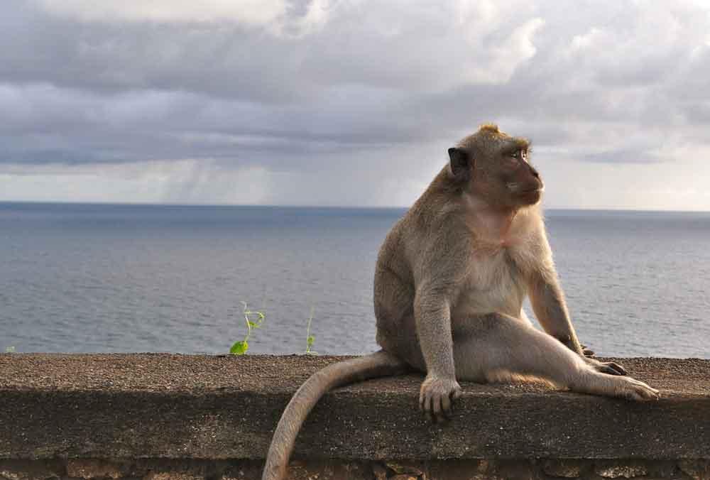 A Friendly Monkey at Uluwatu Temple